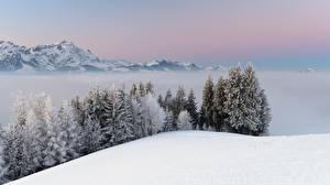 Обои Зима Горы Снег Деревья Туман Природа фото