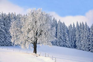 Обои Зима Снег Деревья Природа фото