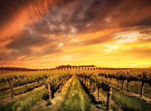Фотографии Австралия Поля Рассветы и закаты Небо Кусты Barossa Valley wine region Природа