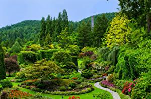 Фото Канада Сады Газон Кусты Деревья Butchart Gardens Victoria Природа