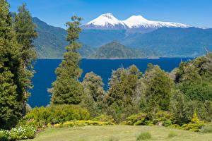Картинка Чили Парк Река Горы Дерево Conguillio National Park