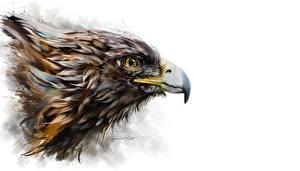 Картинки Орел Птицы Клюв Белым фоном Головы животное