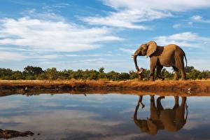 Фотографии Слоны Вода Небо Отражение Животные
