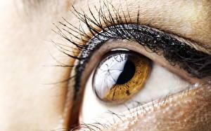 Обои Глаза Ресница Крупным планом Макро