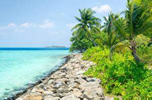 Обои Мальдивы Побережье Тропики Камни Пальмы Природа фото