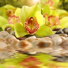 Картинка Орхидеи Крупным планом Отражение Цветы