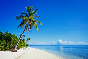 Обои Филиппины Тропики Побережье Море Пальмы Пляж Природа фото