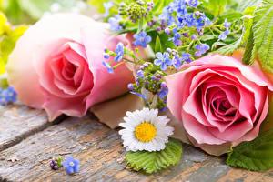 Картинка Розы Ромашка Доски Розовый Двое Цветы