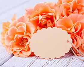Обои Розы Крупным планом Шаблон поздравительной открытки Оранжевый Цветы фото