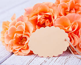 Фотография Розы Вблизи Шаблон поздравительной открытки Оранжевые Цветы