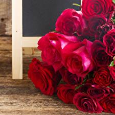 Обои Розы Крупным планом Доски Бордовый Цветы
