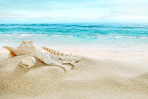 Обои Море Побережье Ракушки Пляж Природа фото