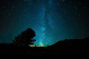 Обои Небо Звезды Ночь Деревья Природа фото