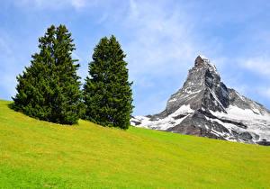 Фотография Швейцария Альпы Скала Ель Трава