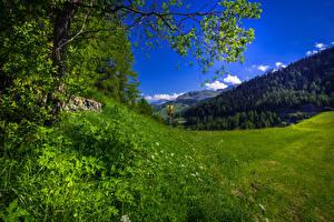 Фото Швейцария Луга Альпы Трава Marmorera Graubuenden