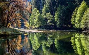 Обои США Парки Озеро Йосемити Деревья Отражение Природа фото