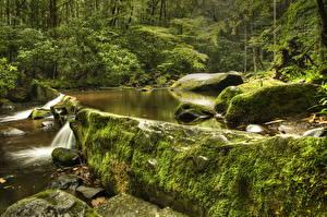 Обои США Парки Камни Ручей Мох Great Smoky Mountains National Park Природа