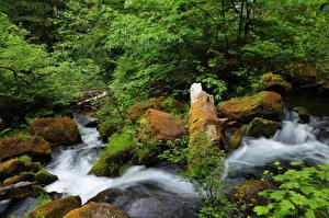 Обои США Водопады Камни Мох Ручей North Umpqua River Oregon Природа фото