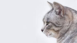 Обои Коты Головы Животные