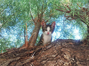 Обои Кошки Котята Взгляд Ствол дерева Вид снизу Животные фото