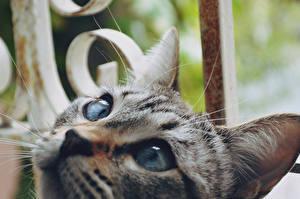 Фотографии Кошка Макросъёмка Крупным планом Глаза Морда Смотрит Животные