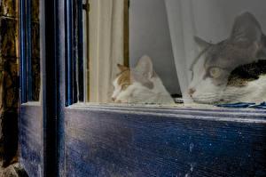 Обои Кошки Окно Взгляд Двое Животные фото