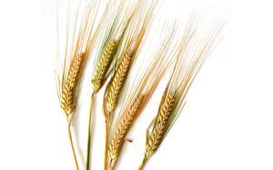 Картинка Крупным планом Пшеница Колос Белым фоном Еда