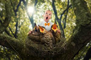 Картинки Оригинальные Птицы Девочки Ствол дерева Гнездо Ребёнок
