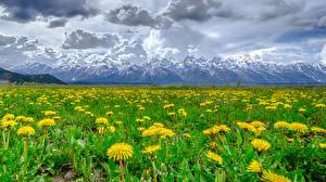Фотографии Одуванчики Луга Горы Пейзаж Облачно Природа