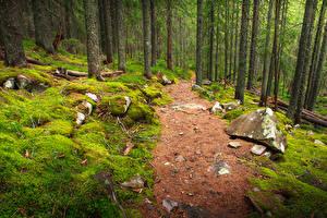 Обои Леса Камни Мох Тропа Природа фото