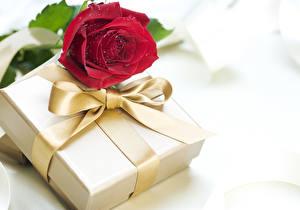 Фотография Праздники Розы Бордовый Подарки Бантик Цветы