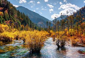 Обои Цзючжайгоу парк Китай Парки Осенние Горы Леса Пейзаж Кусты Природа
