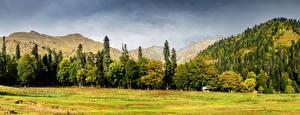 Обои Горы Леса Трава Abkhazia Caucasus Природа фото