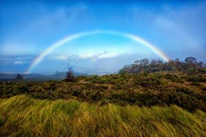 Фотографии Парки Гавайи Радуга Трава Haleakala National Park Rainbow Maui Природа