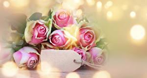 Обои Розы Крупным планом Шаблон поздравительной открытки Цветы фото