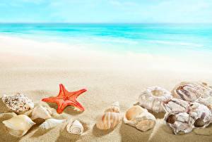 Фотография Морские звезды