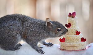 Обои Белка Сладкая еда Торты Сердечко Животные Еда