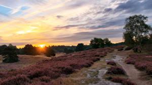 Обои Рассветы и закаты Небо Трава Солнце Природа фото