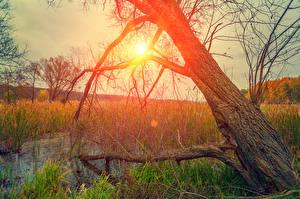 Фотографии Рассвет и закат Ствол дерева Болото Траве Солнце Природа