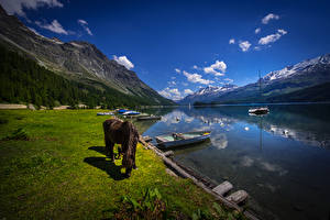 Обои Швейцария Озеро Горы Лошади Лодки Побережье Lake Sils Природа фото