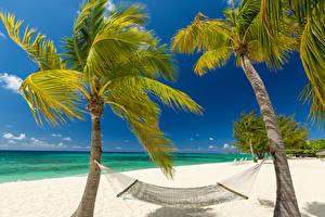 Картинки Тропики Берег Пальмы Гамак Пляж Grand Cayman Природа