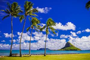 Обои Тропики Побережье Небо Гавайи Пальмы Облака Природа фото