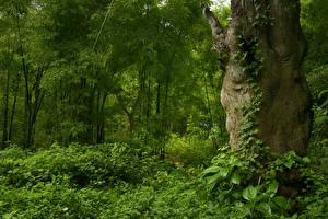 Обои Тропики Лес Дерево Ствол дерева Кусты Jungle Природа