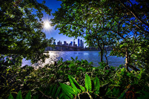 Обои США Дома Мосты Нью-Йорк Солнце Ветки Залив Brooklyn Bridge Города фото