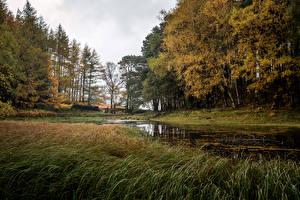 Обои Великобритания Осень Озеро Деревья Glenridding Природа фото