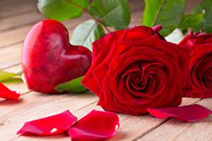 Картинка День святого Валентина Розы Крупным планом Доски Красный Сердечко Лепестки Цветы