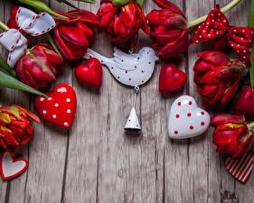 Обои День святого Валентина Тюльпаны Птицы Доски Красный Сердце Колокольчики Цветы фото