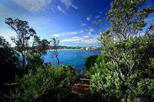 Обои Австралия Река Небо Сидней Кусты Дерева Природа