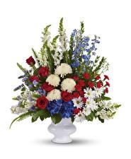 Фото Букеты Хризантемы Розы Антирринум Гвоздики Белый фон Ваза Цветы
