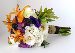Фотография Букеты Эустома Орхидеи Цветной фон